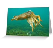 Giant Cuttlefish Greeting Card