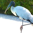 Wood stork on one leg by ♥⊱ B. Randi Bailey