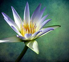 I Am He Who Rises by Wendi Donaldson