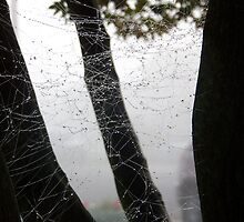 Spider Web by Gary Pierantozzi