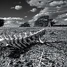 Driza Bone by Andy73