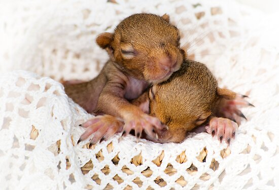Meet Capt & Billy_Squirrel Rescue! #1 by amey fischer