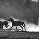 HORSE SILHOUETTES IN BLACK AND WHITE by Magaret Meintjes