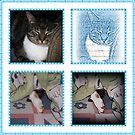Cat Real And Cartoon Collage by Jonice