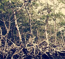 Mangrove Roots by mkwalsh