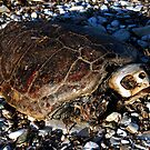 dead turtle by fisherman84