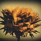 A Fading Spanish Thistle... by Berns