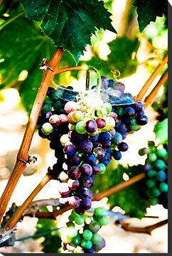 Grapes of Raph by Nancy Stafford