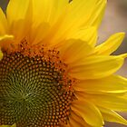 sunflower 7 by nan wyatt