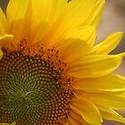 sunflower 7 by nan wyatt