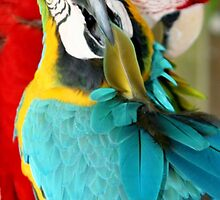 Macaws at Jungle Gardens XVIII by Sheryl Unwin