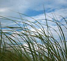 Summer Breeze by BarkingGecko