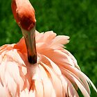 Flamingo at Jungle Gardens XI by Sheryl Unwin
