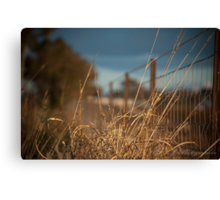 Grass infront of wire fence Canvas Print