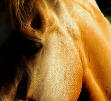 Golden horse by Penny Kittel
