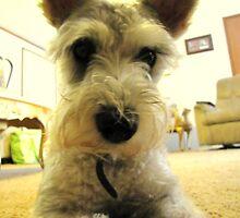 Dog's Eye View by destinySHOOTS