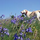 Ben - labrador and flowers by wombat37