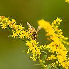 Pollen camo 2 by Sean McConnery