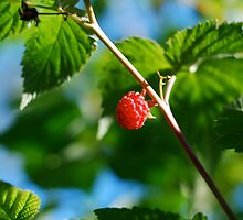 Raspberry by Roxanne Persson