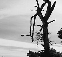 Desolation - Mornington by Karen Coulter