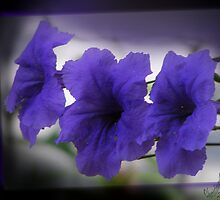 Mexican Petunias by Christina Sauber
