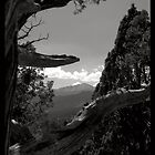 Sentinel - Garden of the Gods, Colorado by Limajo