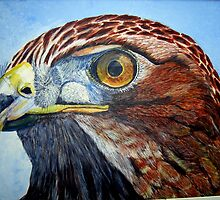 Red Tailed Hawk by Pauline Jones