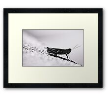 grasshopper Framed Print