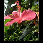 Hibiscus part 2 by Maurice Gomez