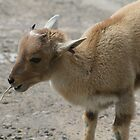 Baa baa ry lamb by ellismorleyphto