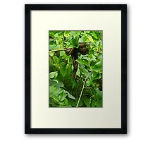 Two in a Tango~or Tangle Framed Print