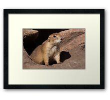 Prairie Dog Framed Print