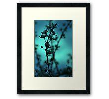 Blossom Blur Framed Print