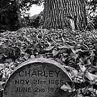 Here Lies Loyal Charley & Pippy by Ryan Davison Crisp