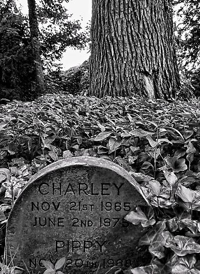 Here Lies Loyal Charley & Pippy by Ryan Davison Crisp