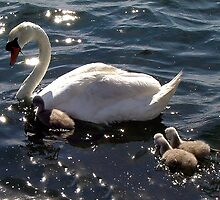 Swan Lake by Nancy Richard