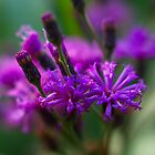 Everything Purple by LeeAnne Emrick