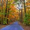 Country Roads in AUTUMN GLORY! (MEMBERS ONLY)