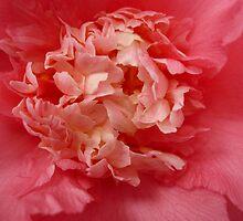 OG Camellia 1 by beeden