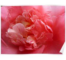 OG Camellia 2 Poster