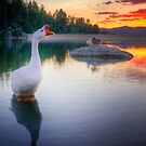 Hey Duck by Bob Larson