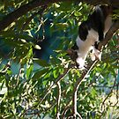 Call a Firefighter.....the cats in the tree again by Sunshinesmile83