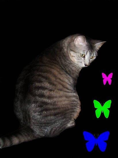 Cat and Butterflies ©  by Dawn M. Becker