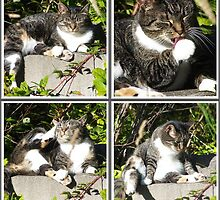 Leisure Time Of A Cat Collage by Jonice