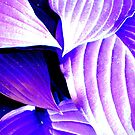 Hostas in Purple by Deb  Badt-Covell