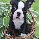 puppy basket  by Cazzie Cathcart