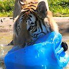 Tiger Play by Dawn B Davies-McIninch