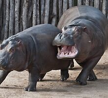 Hippo Nanny by Tom Newman
