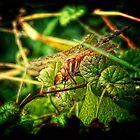 Bug Shot by Simon Duckworth