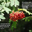 Psalms 34 v 3-4 in berries by Dawnsuzanne